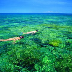 One of the only north facing protected snorkeling places on the Great Barrier Reef perfect for all weather