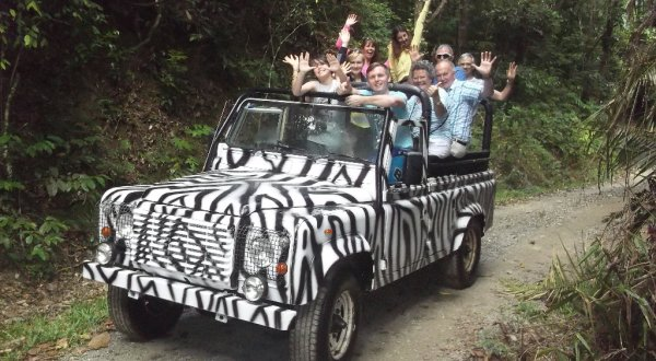 Open Top Vehicle Safari Through Daintree Rainforest