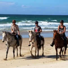 Optional Activity Horse Riding On Cape Tribulation Beach | 2 Day 1 Night Package