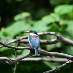 Our nature guide is a specialist bird enthusiast in the Daintree Rainforest