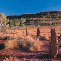 Outback road on Mulligan Highway with termite mounds