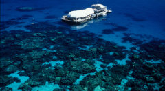 Outer Great Barrier Reef Day Trip