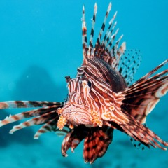 Overnight Australian Great Barrier Reef Trip | Lionfish