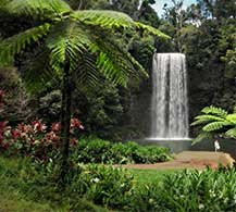 Rainforest Tours by The Tour Specialists