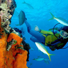 Certified Diving | Make The Most Of The Great Barrier Reef Whilst In Cairns North Queensland