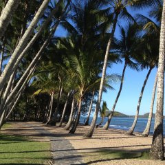 Palm Cove Beach Lined with Coconut Trees