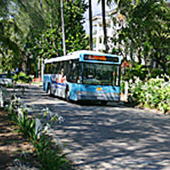 Palm Cove Bus services