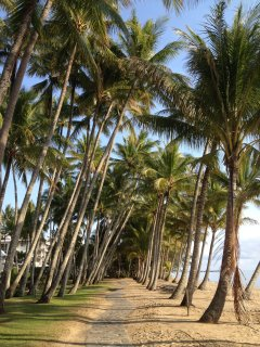 Palm Cove History