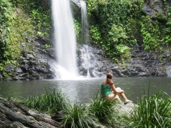 Palm Cove Tours - Daintree Rainforest