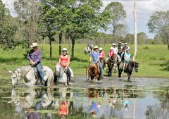 Palm Cove Tours - Horse riding