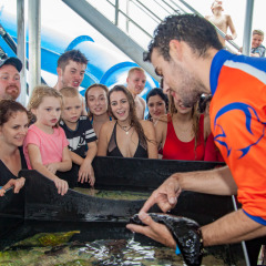 Perfect family friendly half day reef trip from Cairns | Touch Tank