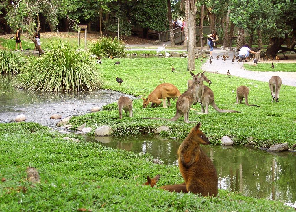 The Wildlife Habitat Port Douglas