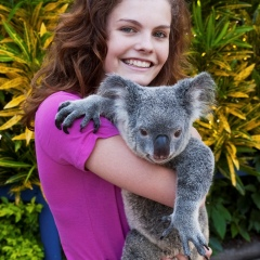 Photo With A Koala | Cuddle A Koala | Daily Kuranda Full Day Trip | From Cairns Tropical North Queensland