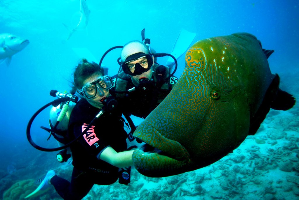 Padi Dive Courses Learn To Dive Advanced Cairns Great Barrier Reef