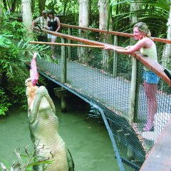 Pole feed a large crocodile at Hartleys Crocodile Park