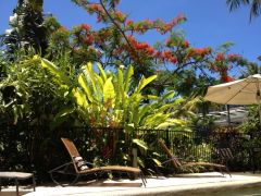 Port Douglas Adult only holiday Apartments Poolside