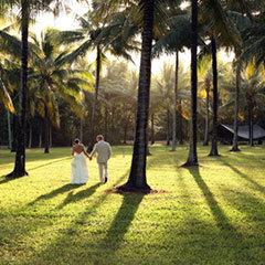 Port Douglas Wedding couple strolling under the palm trees of Thala Lodge