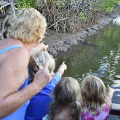 Port Douglas Wildlife Spotting Sunset River Cruise