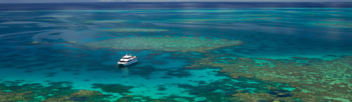 Great Barrier Reef Cruises Port Douglas | Swim with Whales | Dive & Snorkel
