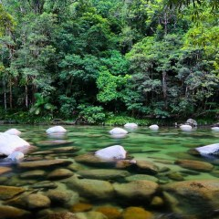 Pristine waters in the Daintree Rainforest