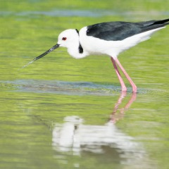 Cairns Private Bird Watching Tour | Small Group