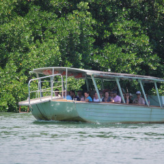 Private Charter Daintree River Cruise