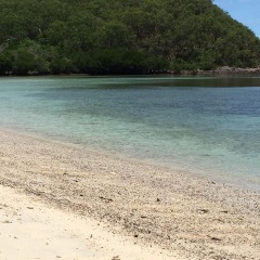 Private Charter Sailing Boat To Snapper Island Or Low Isles | Small Group Max 12 Guests