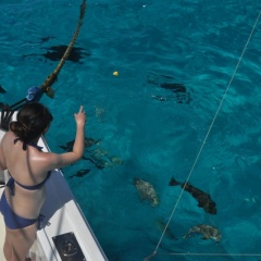 Light Tackle Fishing On The Great Barrier Reef Private Charter Boat | Departs Cairns In North Queensland Australia