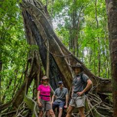 Private Daintree Rainforest Walking Tour - Private Tour Guide