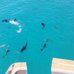 Private Day Charter On The Great Barrier Reef
