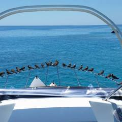 Private Day Trip To The Great Barrier Reef | Great View From The Back Of The Boat