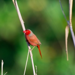 Private Birding Tour With Exclusive Access To Nature Reserve on Atherton Tablelands