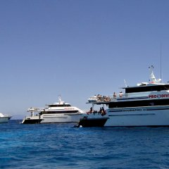 Pro Dive fleet of boats on Great Barrier Reef