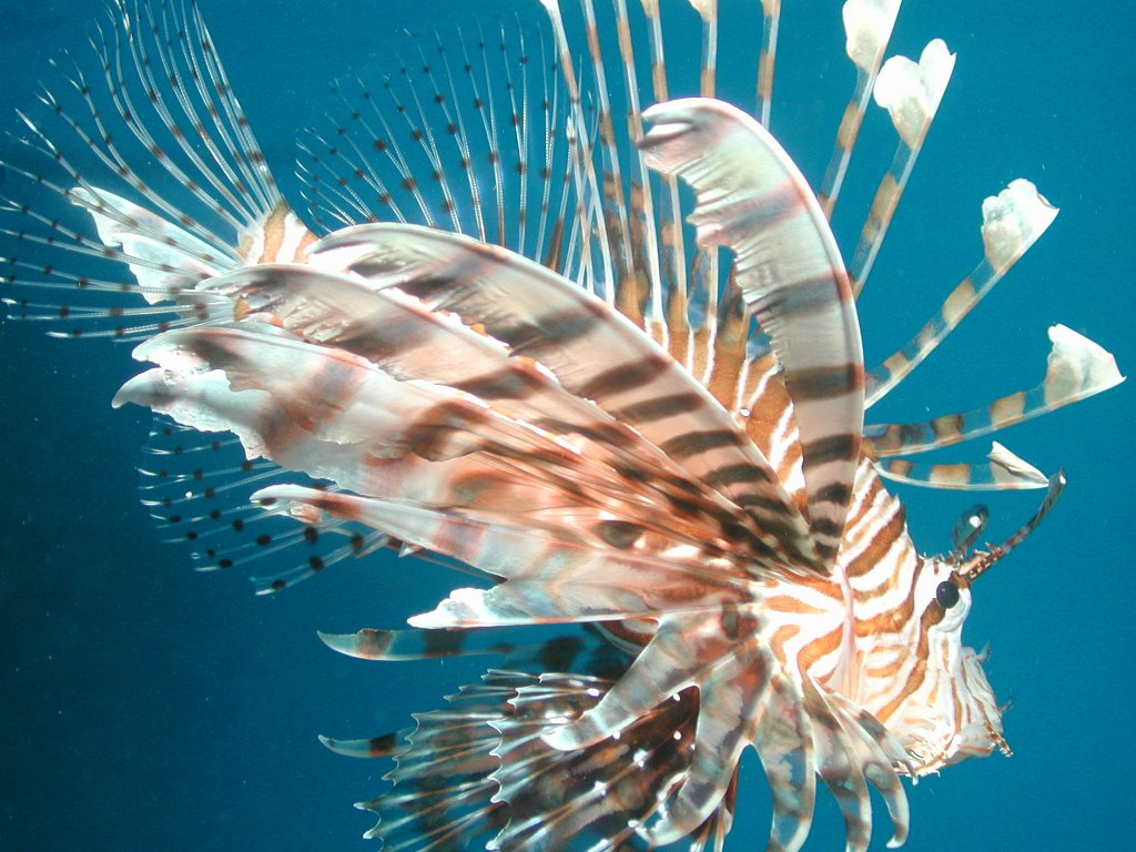 Cairns attractions great barrier reef tours cairns for Great barrier reef fish