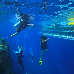 Pure dive trips on the Great Barrier Reef in Australia