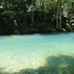 Pure mountain water in the Daintree & Cape Tribulation Rainforests Queensland Australia