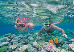 Port Douglas Reef Trips | Quicksilver Outer Barrier Reef