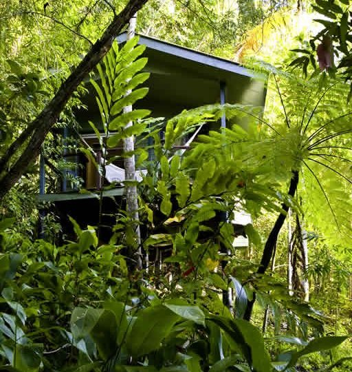 Private Treehouse Accommodation amongst the Rainforest at Silky Oaks Eco Resort - 15 minutes from Port Douglas