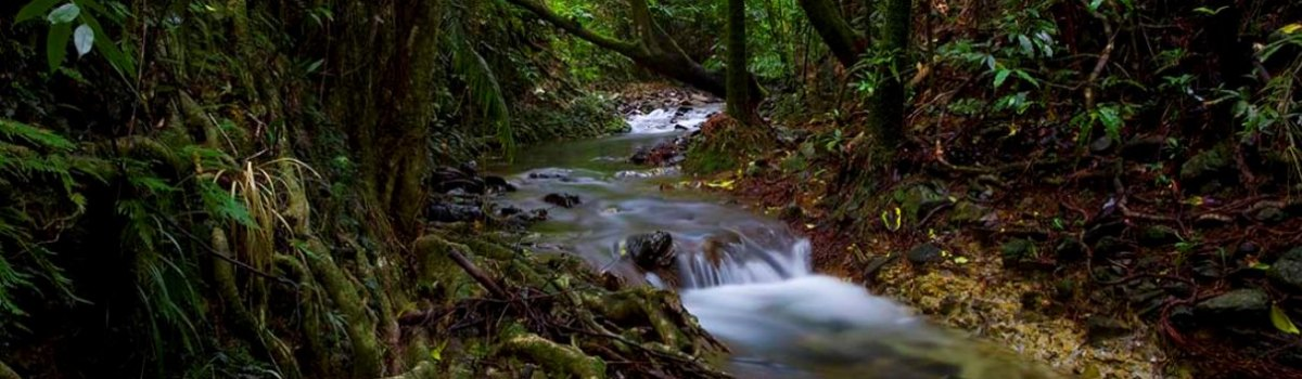 Rainforest rivers and streams in the Daintree & Cape Tribulation Rainforests Queensland