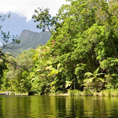 Daintree Rainforest and Cape Tribulation Rainforest - Image of Daintree River