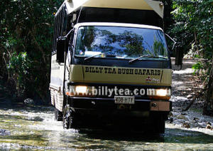 Daintree Rainforest Tours & Bush Safaris