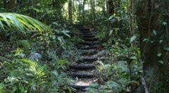 Rainforest Walking Tracks perfect for those honeymoon afternoon strolls - Daintree Cape Tribulation