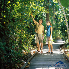 Spend some time exploring the rainforest walks on Green Island in Queensland Australia