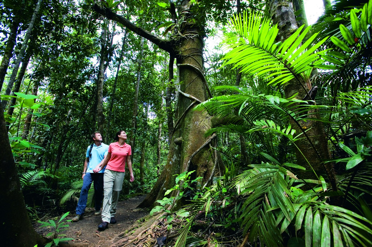 cairns attractions lake barrine volcanic crater