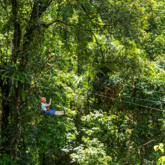 Rainforest Ziplining Cairns - - Daintree Cape Tribulation Ziplining Tour