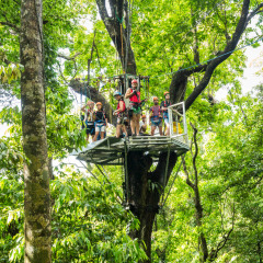 Ready, Set, Leap! - Daintree Cape Tribulation Ziplining Tour
