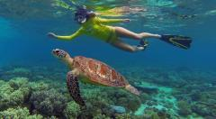 Reef n Rainforest Package - Cape Tribulation & Great Barrier Reef Experience