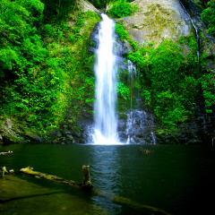 Refreshing Swim at Cassowary Falls | Morning Private Charter to Daintree