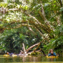 Relax under the rainforest canopy on the Mossman River