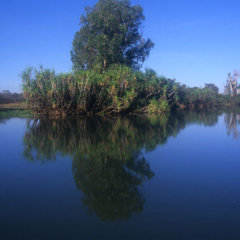Remote rivers in North Queensland